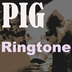 Pig Ringtone