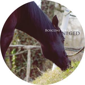Bosconi Stallions - Neged