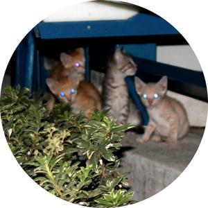 The Cat Crew Cutz