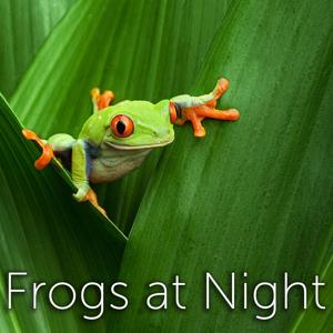 Frogs at Night