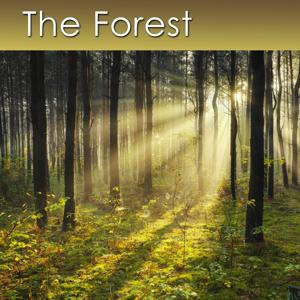 The Forest (Relaxing Music with Healing Sounds of the Forest)