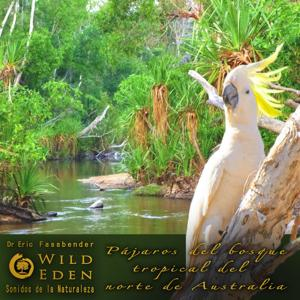 Pájaros Del Bosque Tropical Del Norte De Australia