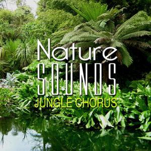 Nature Sounds: Jungle Chorus