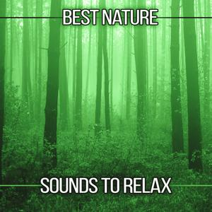 Best Nature Sounds to Relax – Soothing Sounds, Forest Relaxation, Free Time, New Age Music